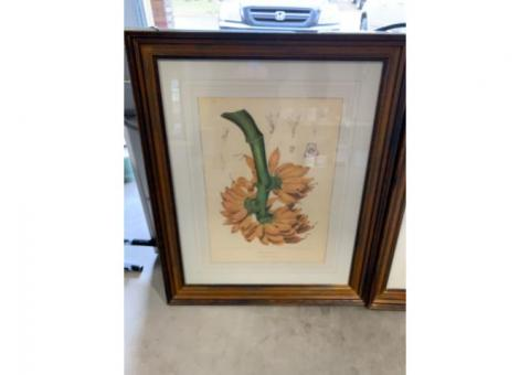 LARGE PICTURES WITH WOODEN FRAMES